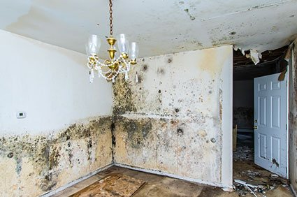 mold infested walls